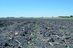 Precision Solutions Saves Time in Missouri Replant Claim